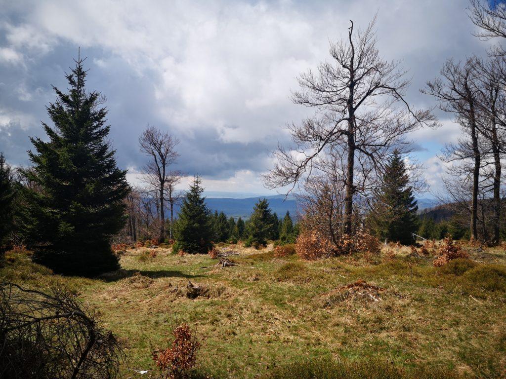 Wielka Sowa i Waligóra