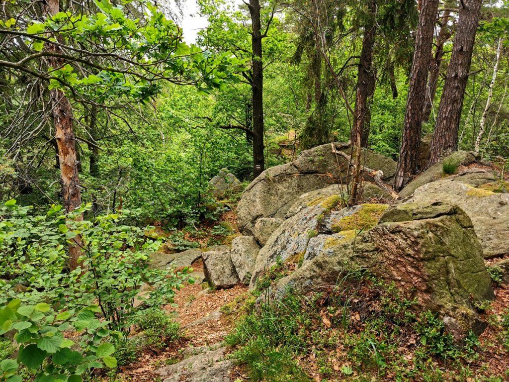 skały wilhelma